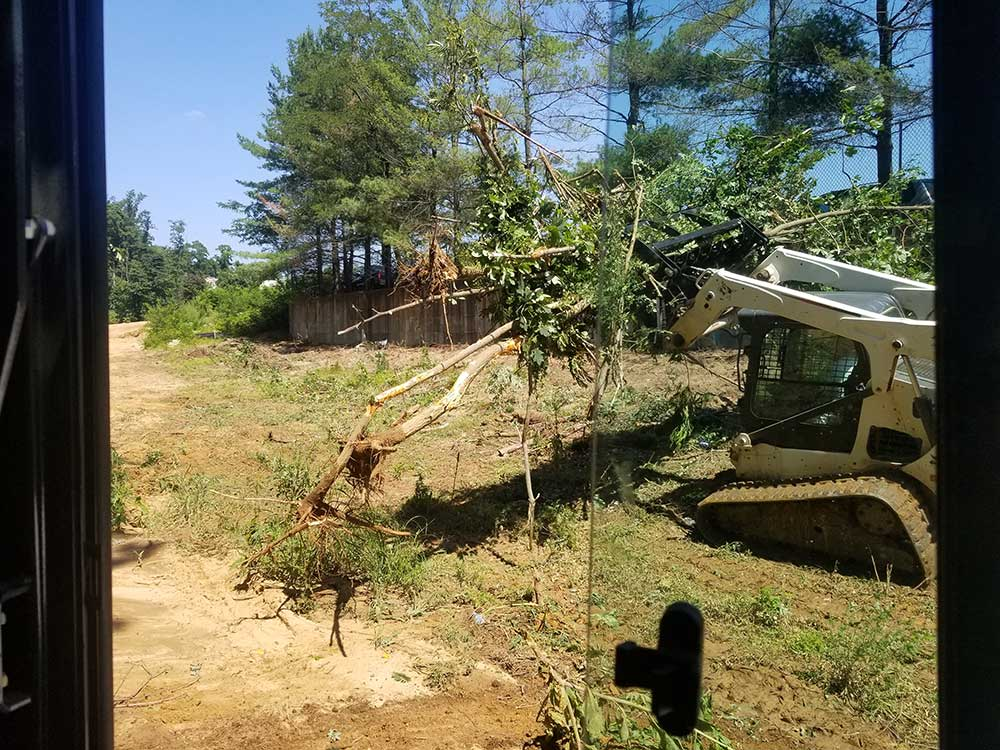 Clearing and Vegetation Removal Gallery 1