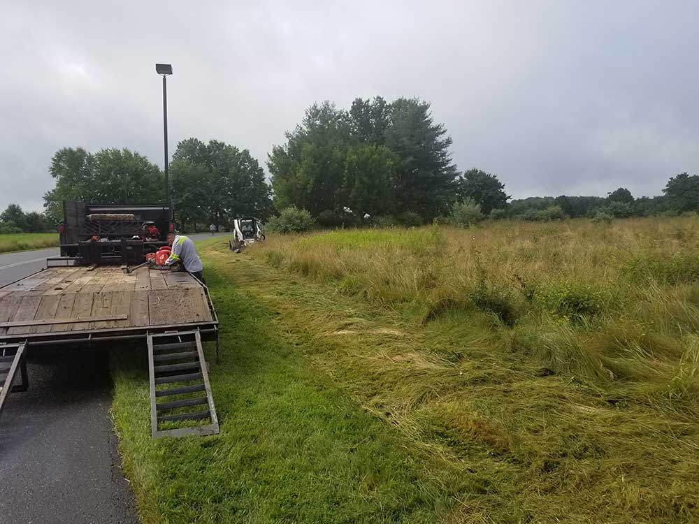 Clearing and Vegetation Removal Gallery 2