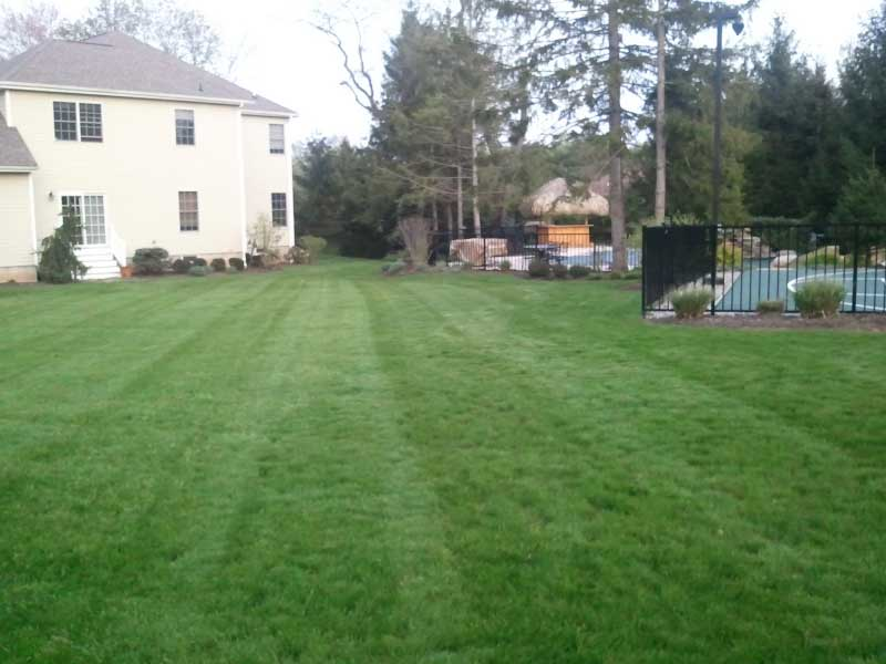 Lawn Care and Maintenance gallery 2