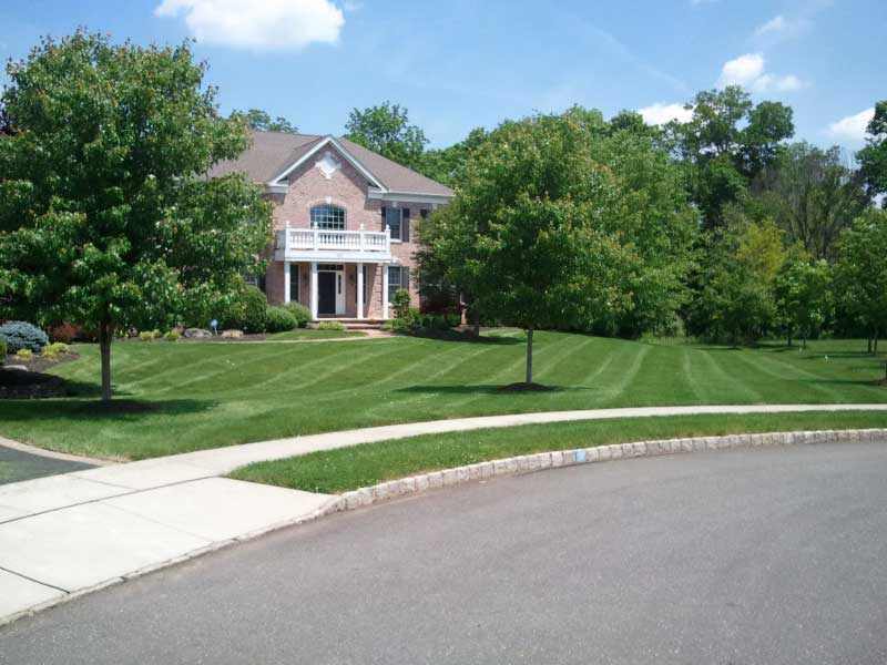 Lawn Care and Maintenance gallery 3