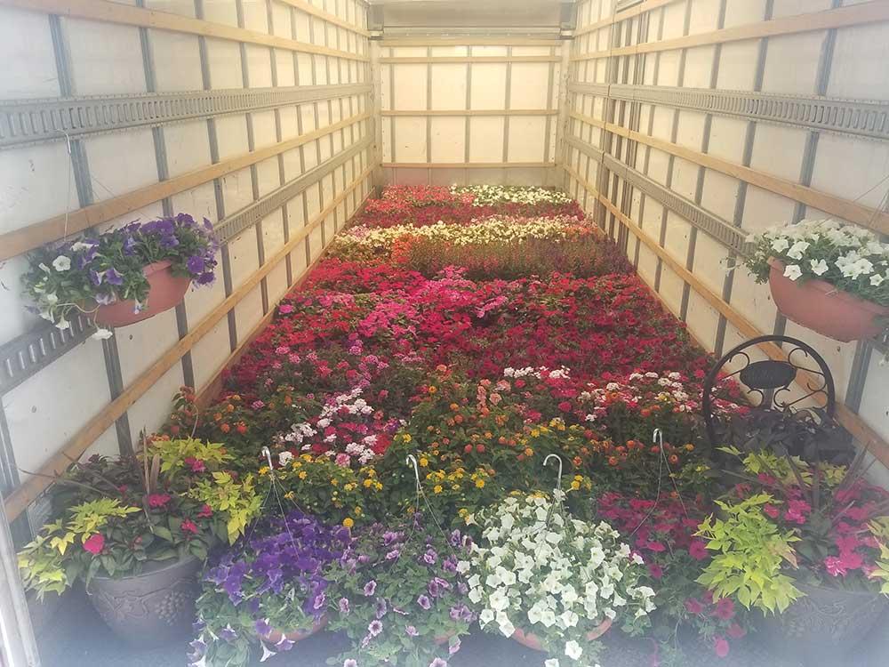 Seasonal Flowers Gallery 7