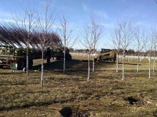 Planting Gallery 4