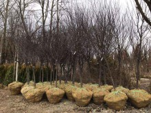 Planting Gallery 5