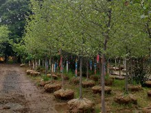 Planting Gallery 2