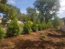 Planting Gallery 17